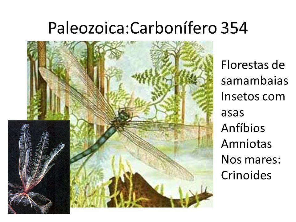 Paleozoica:Carbonífero 354 Florestas de samambaias Insetos com asas Anfíbios Amniotas Nos mares: Crinoides