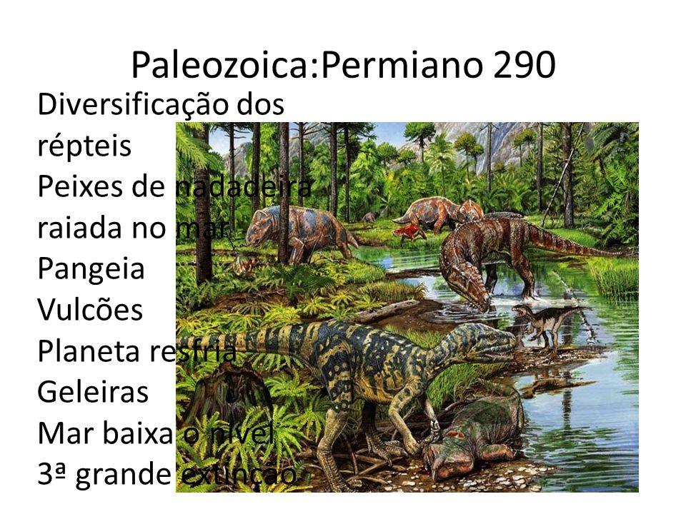 Paleozoica:Permiano 290 Diversificação dos répteis Peixes de nadadeira raiada no mar Pangeia Vulcões Planeta resfria Geleiras Mar baixa o nível 3ª grande extinção