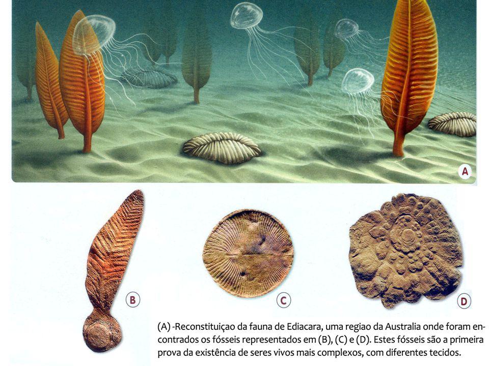 Jurássico:206 Dois continentes: Laurásia e Gondwana Grandes dinossauros Surgem os primeiros mamíferos Nos mares:répteis marinhos, eram os grandes predadores.