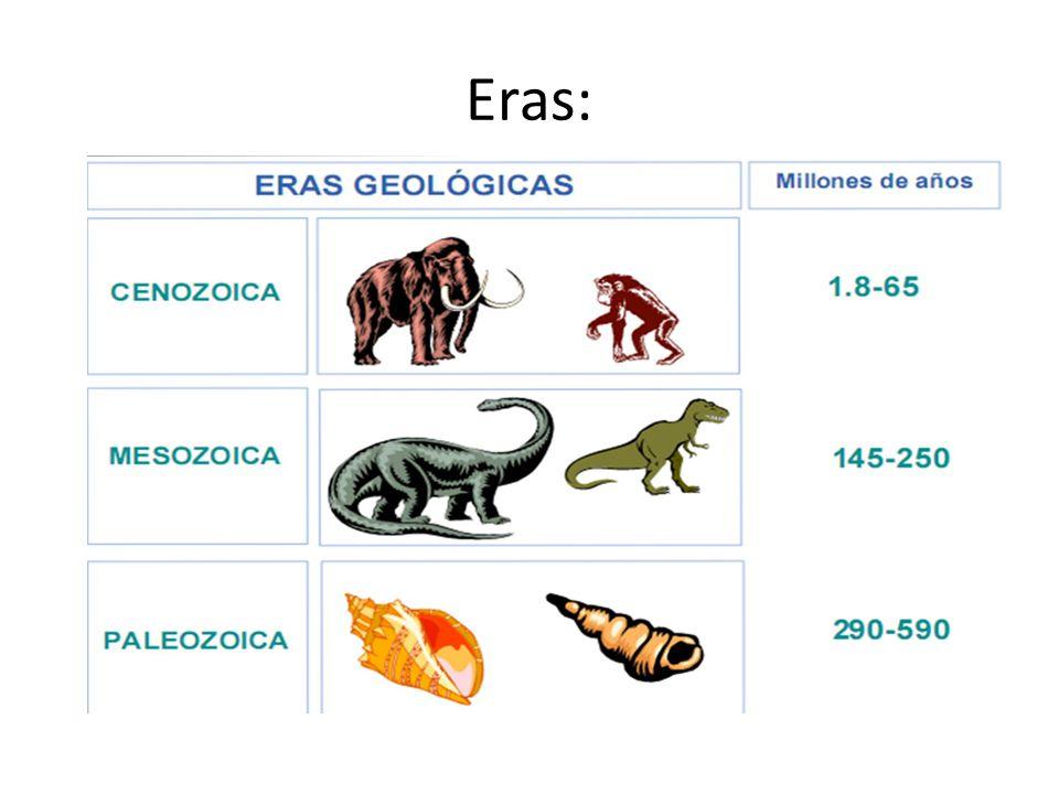 Era Paleozoica: Cambriano 542 Trilobitas (principais fósseis)