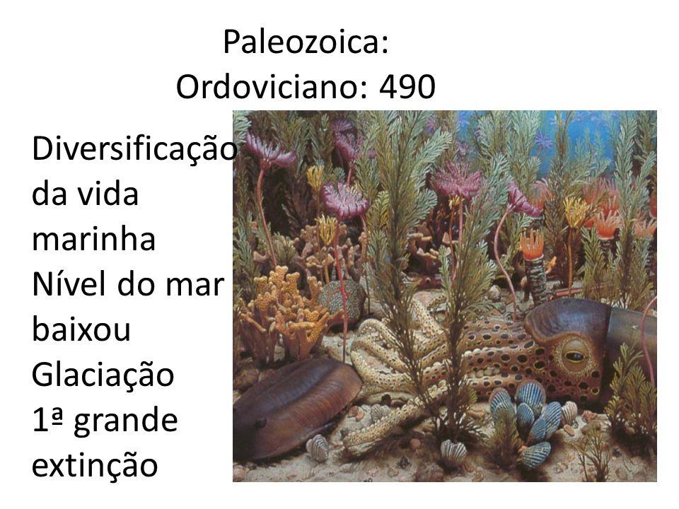Paleozoica: Ordoviciano: 490 Diversificação da vida marinha Nível do mar baixou Glaciação 1ª grande extinção