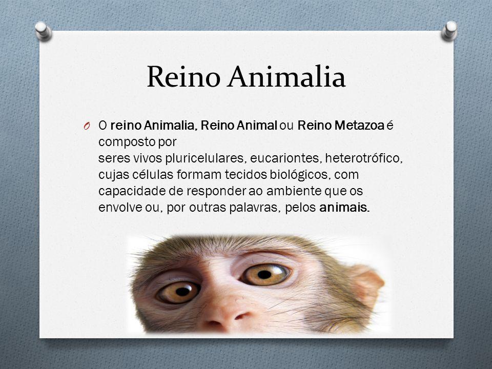 Reino Animalia O O reino Animalia, Reino Animal ou Reino Metazoa é composto por seres vivos pluricelulares, eucariontes, heterotrófico, cujas células