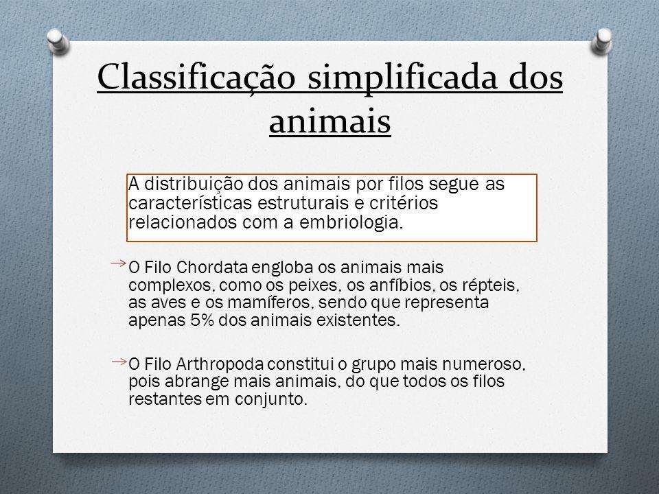 Classificação simplificada dos animais A distribuição dos animais por filos segue as características estruturais e critérios relacionados com a embrio
