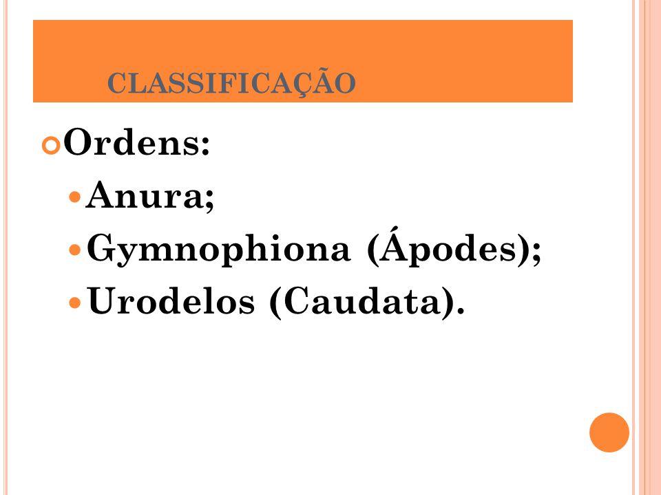 CLASSIFICAÇÃO Ordens: Anura; Gymnophiona (Ápodes); Urodelos (Caudata).