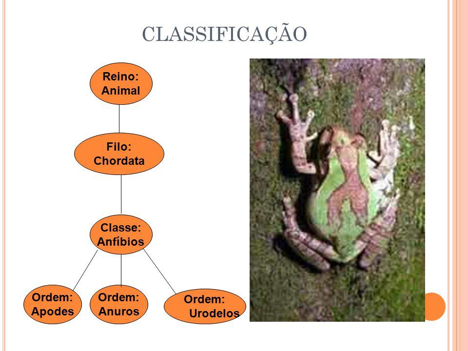 CLASSIFICAÇÃO Ordem: Anuros Classe: Anfíbios Filo: Chordata Reino: Animal Ordem: Apodes Ordem: Urodelos