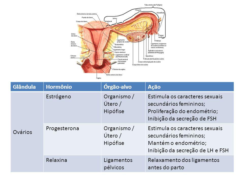 GlândulaHormônioÓrgão-alvoAção Ovários EstrógenoOrganismo / Útero / Hipófise Estimula os caracteres sexuais secundários femininos; Proliferação do end