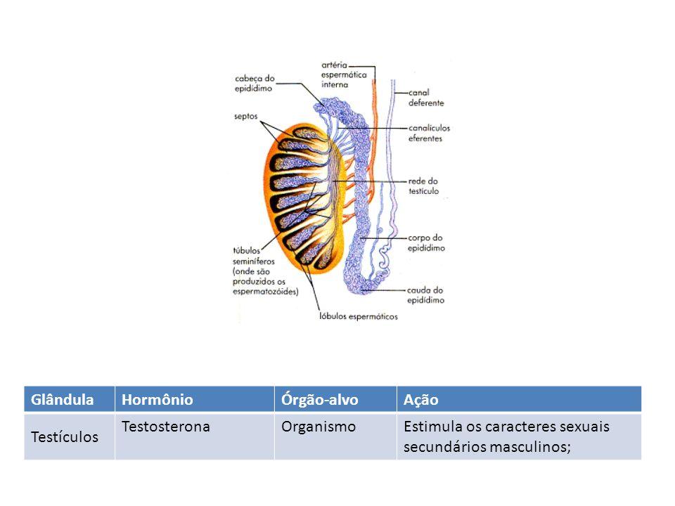 GlândulaHormônioÓrgão-alvoAção Testículos TestosteronaOrganismoEstimula os caracteres sexuais secundários masculinos;