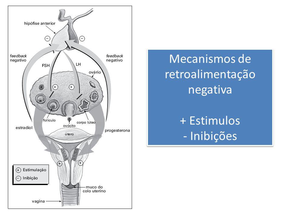 Mecanismos de retroalimentação negativa + Estimulos - Inibições Mecanismos de retroalimentação negativa + Estimulos - Inibições