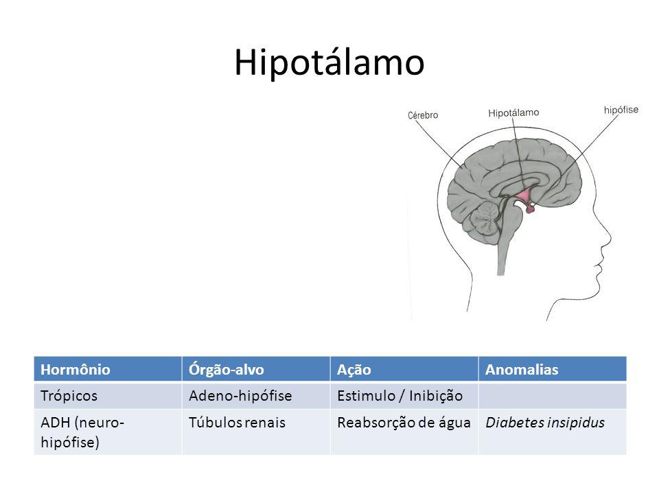 Hipotálamo HormônioÓrgão-alvoAçãoAnomalias TrópicosAdeno-hipófiseEstimulo / Inibição ADH (neuro- hipófise) Túbulos renaisReabsorção de águaDiabetes in