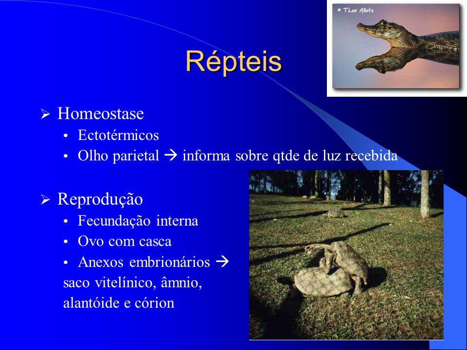 Répteis  Homeostase Ectotérmicos Olho parietal  informa sobre qtde de luz recebida  Reprodução Fecundação interna Ovo com casca Anexos embrionários