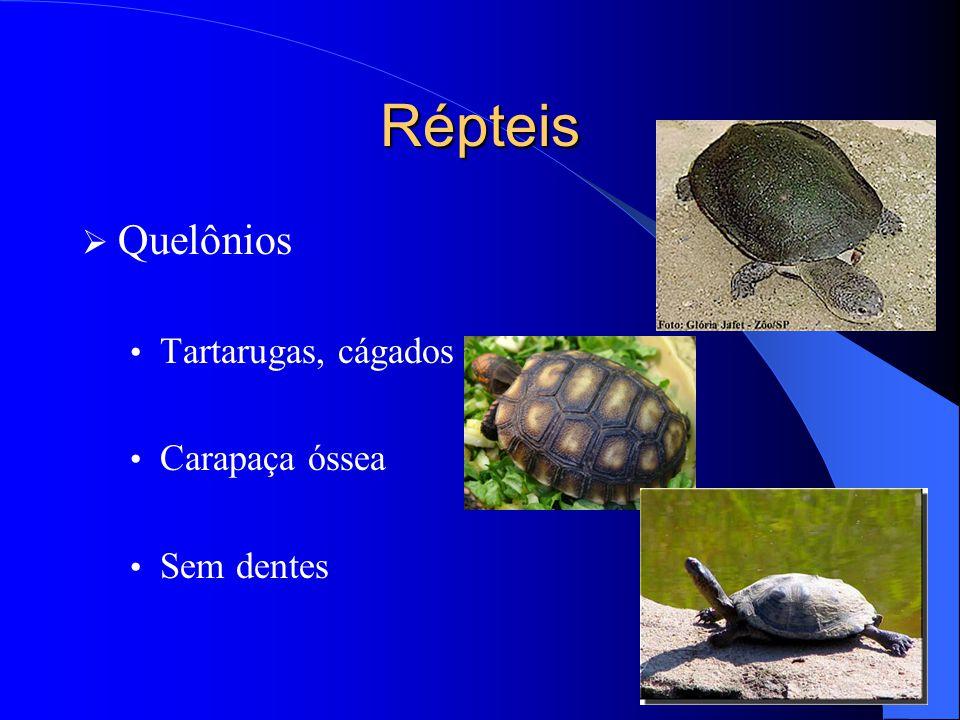 Répteis  Quelônios Tartarugas, cágados e jabutis Carapaça óssea Sem dentes