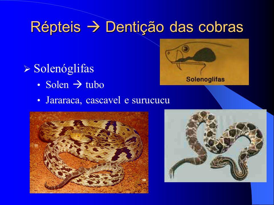 Répteis  Dentição das cobras  Solenóglifas Solen  tubo Jararaca, cascavel e surucucu