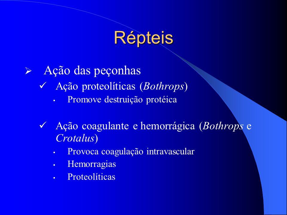 Répteis  Ação das peçonhas Ação proteolíticas (Bothrops) Promove destruição protéica Ação coagulante e hemorrágica (Bothrops e Crotalus) Provoca coag