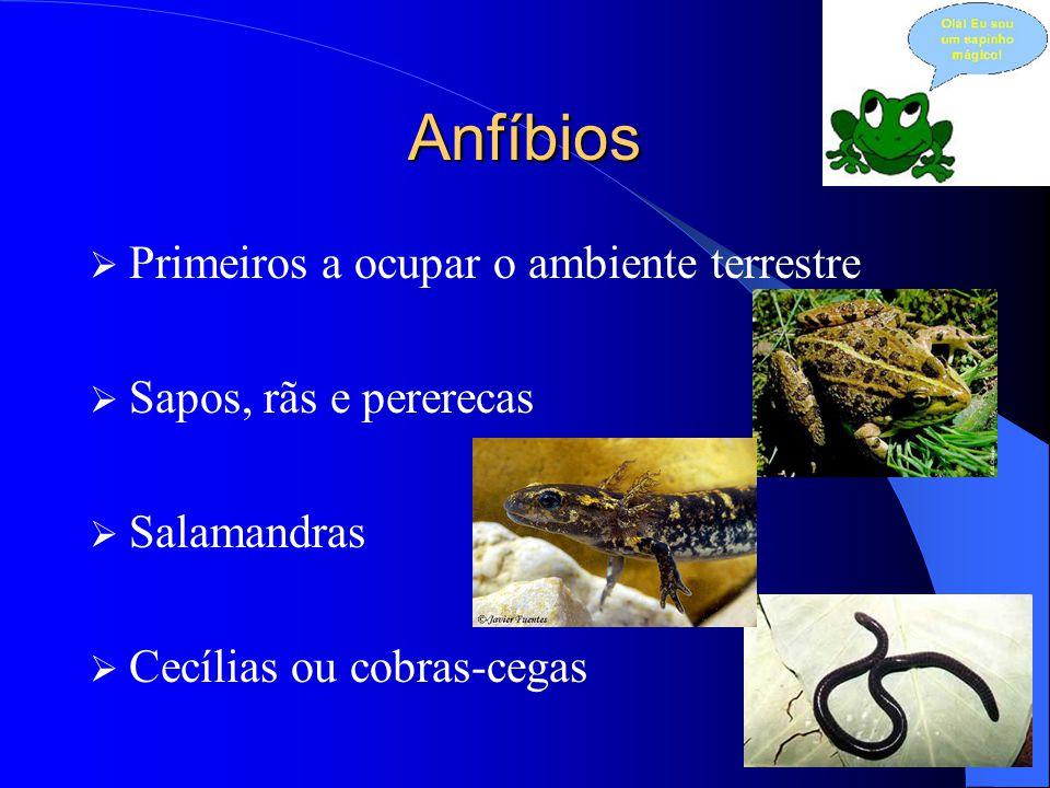 Anfíbios  Primeiros a ocupar o ambiente terrestre  Sapos, rãs e pererecas  Salamandras  Cecílias ou cobras-cegas