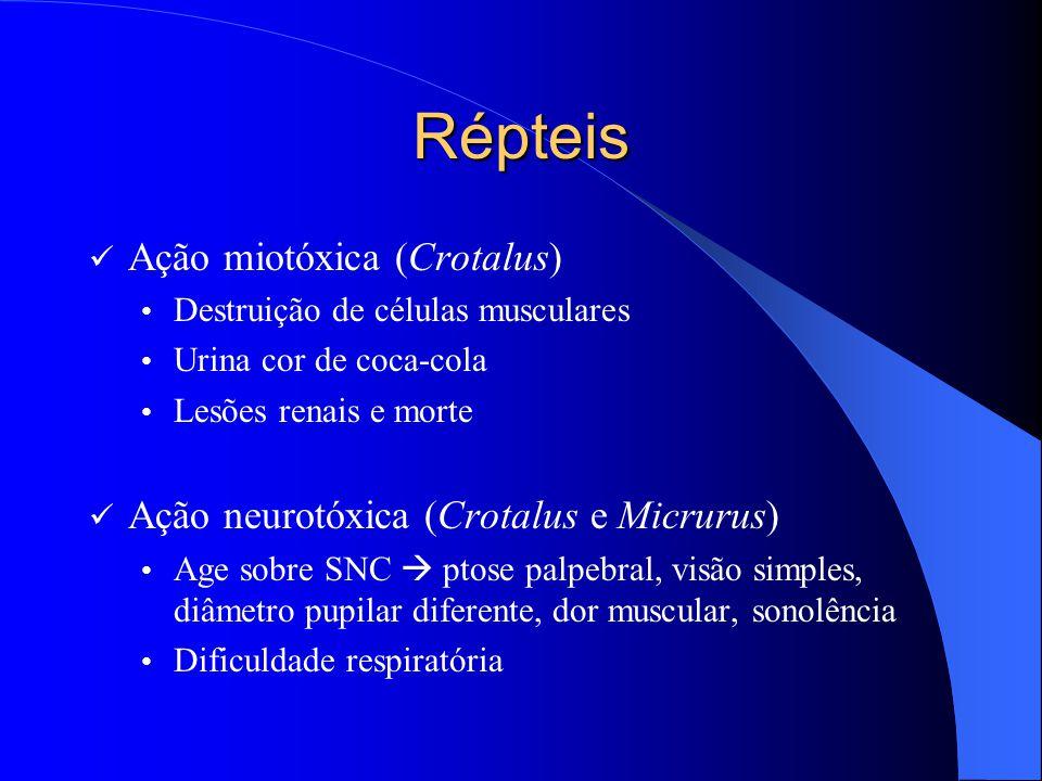Répteis Ação miotóxica (Crotalus) Destruição de células musculares Urina cor de coca-cola Lesões renais e morte Ação neurotóxica (Crotalus e Micrurus)