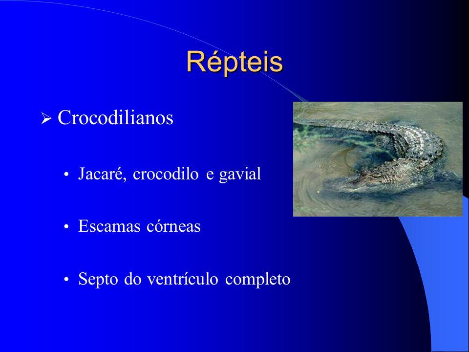 Répteis  Crocodilianos Jacaré, crocodilo e gavial Escamas córneas Septo do ventrículo completo