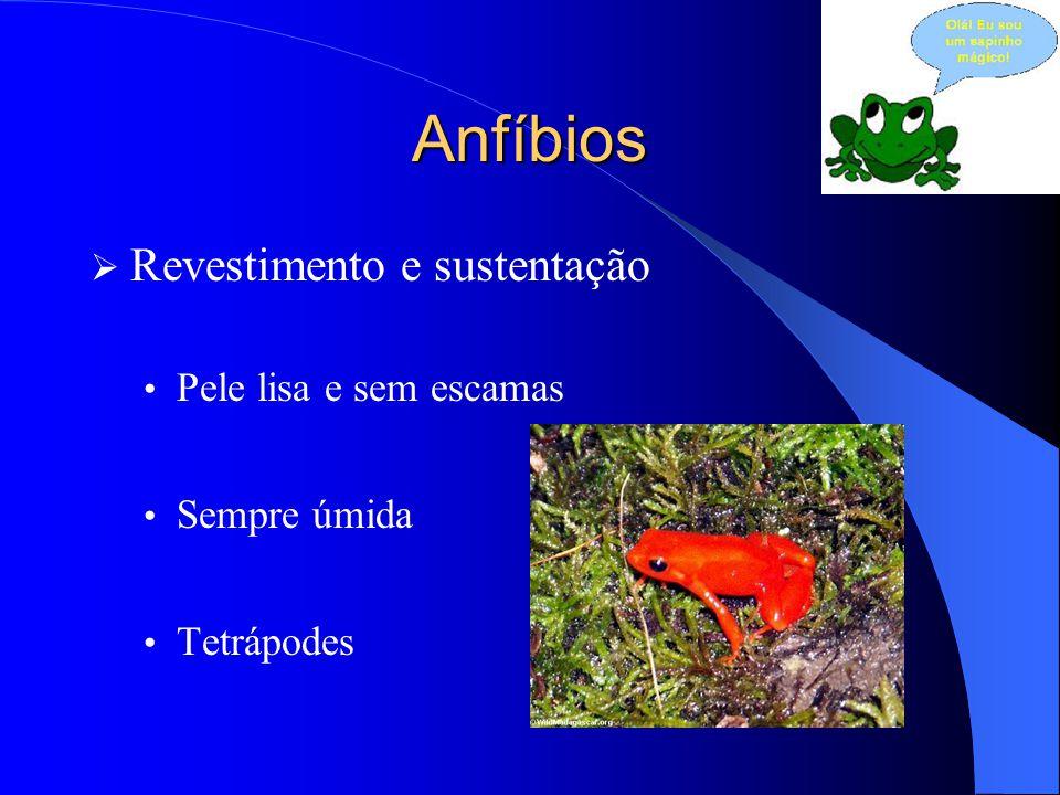 Anfíbios  Revestimento e sustentação Pele lisa e sem escamas Sempre úmida Tetrápodes
