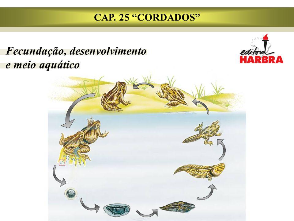"""CAP. 25 """"CORDADOS"""" Fecundação, desenvolvimento e meio aquático"""