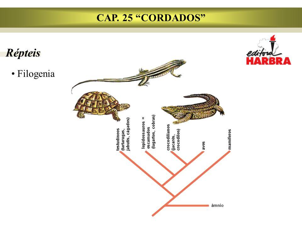 "Répteis CAP. 25 ""CORDADOS"" Filogenia âmnio testudíneos (tartarugas, jabutis, cágados) lepidossauros = escamados (lagartos, cobras) crocodilianos (jaca"