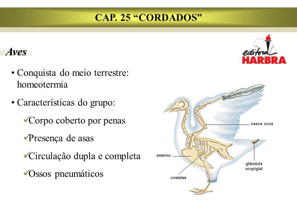 """Aves CAP. 25 """"CORDADOS"""" Conquista do meio terrestre: homeotermia Características do grupo: Corpo coberto por penas Presença de asas Circulação dupla e"""