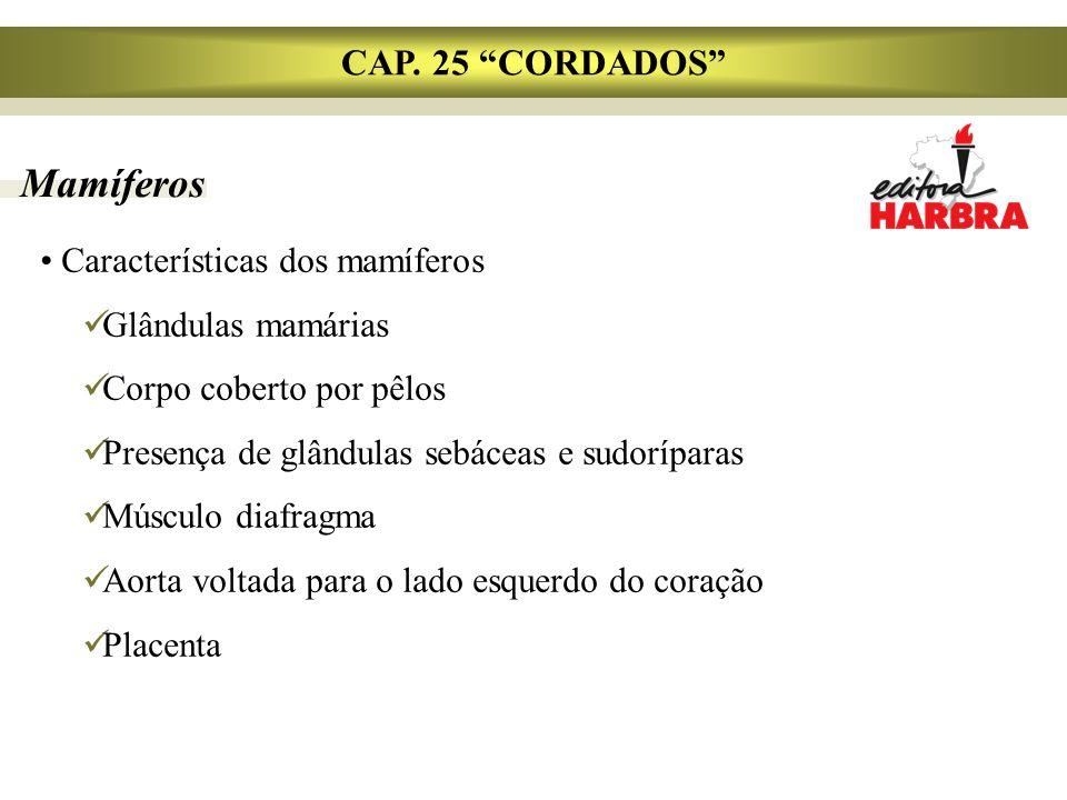 "Mamíferos CAP. 25 ""CORDADOS"" Características dos mamíferos Glândulas mamárias Corpo coberto por pêlos Presença de glândulas sebáceas e sudoríparas Mús"