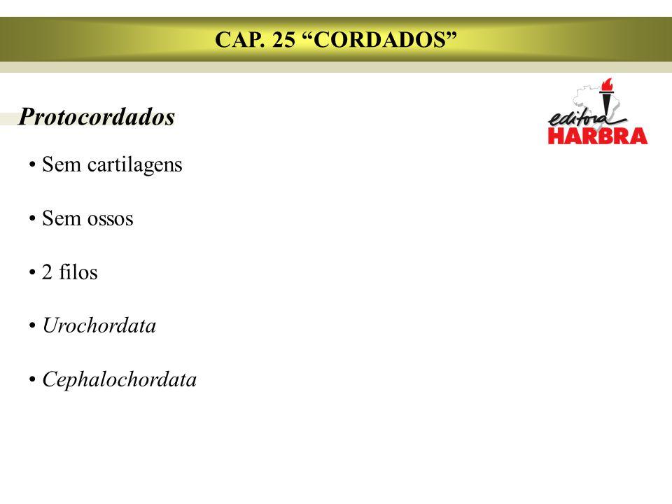 """Protocordados Sem cartilagens Sem ossos 2 filos Urochordata Cephalochordata CAP. 25 """"CORDADOS"""""""