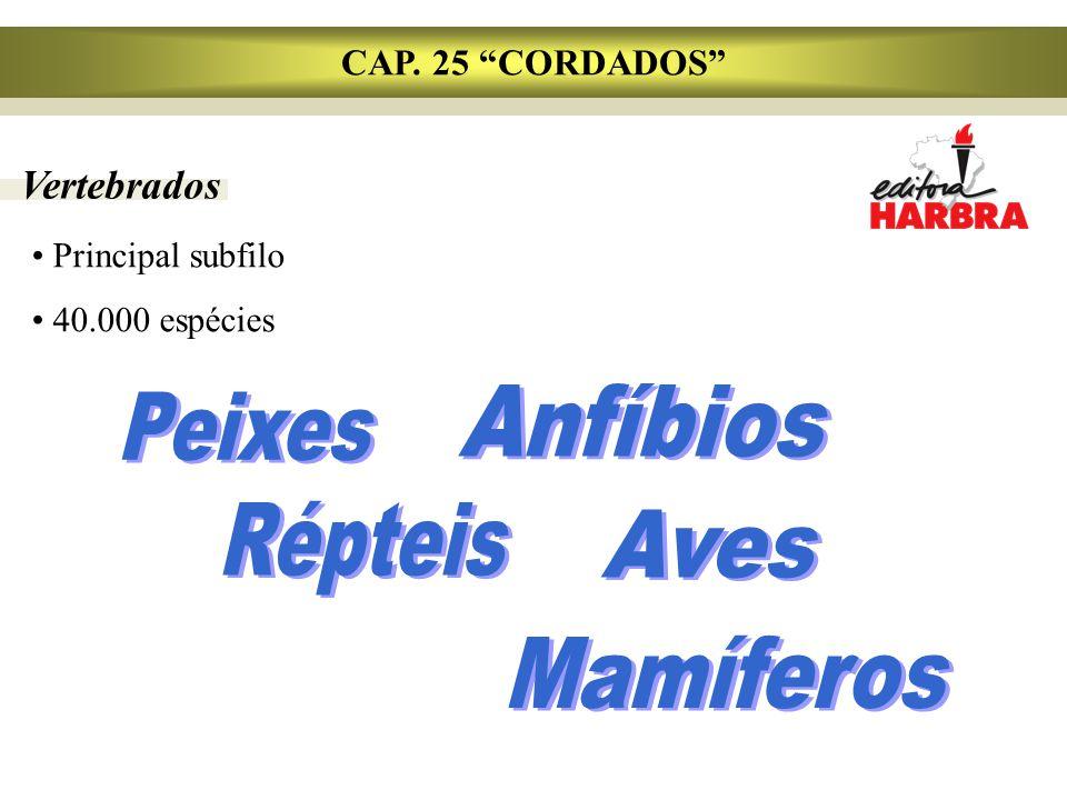 """Vertebrados CAP. 25 """"CORDADOS"""" Principal subfilo 40.000 espécies"""