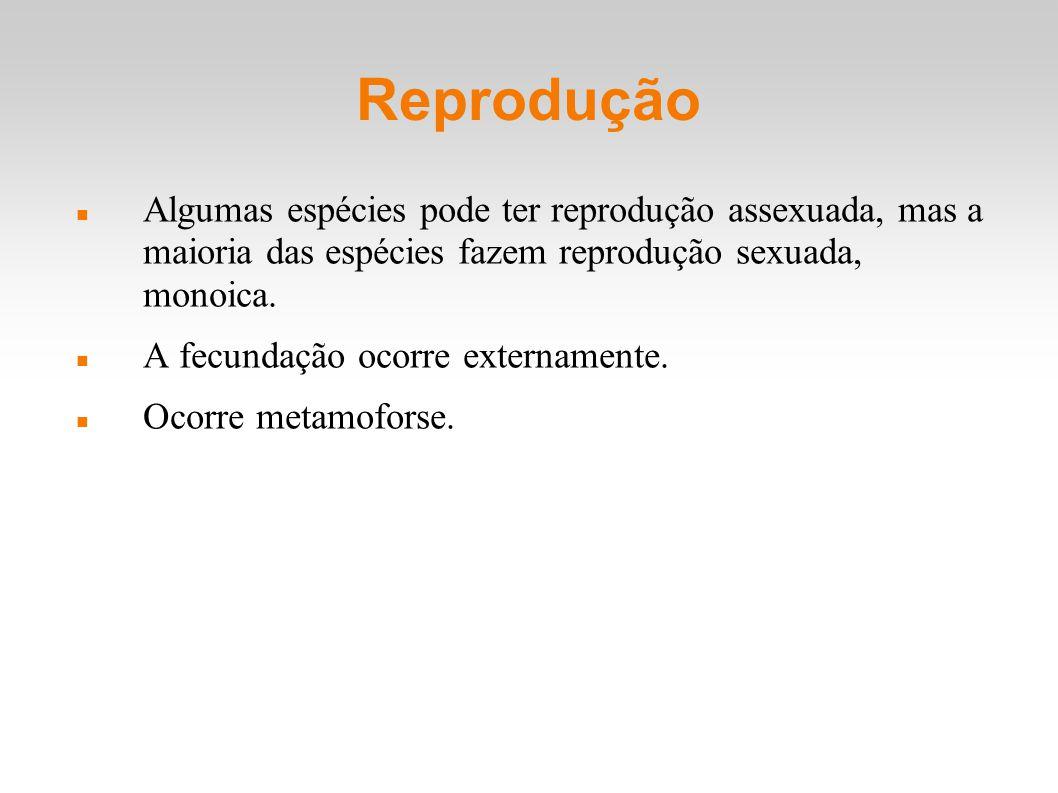 Reprodução Algumas espécies pode ter reprodução assexuada, mas a maioria das espécies fazem reprodução sexuada, monoica. A fecundação ocorre extername