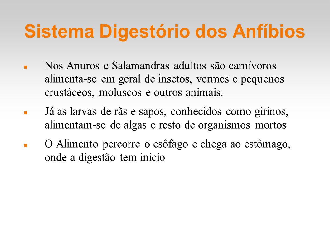 Sistema Digestório dos Anfíbios Nos Anuros e Salamandras adultos são carnívoros alimenta-se em geral de insetos, vermes e pequenos crustáceos, molusco