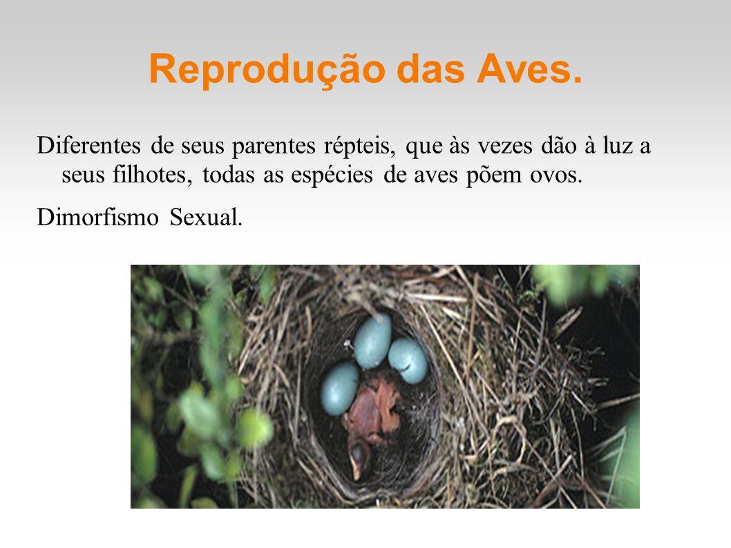 Reprodução das Aves. Diferentes de seus parentes répteis, que às vezes dão à luz a seus filhotes, todas as espécies de aves põem ovos. Dimorfismo Sexu