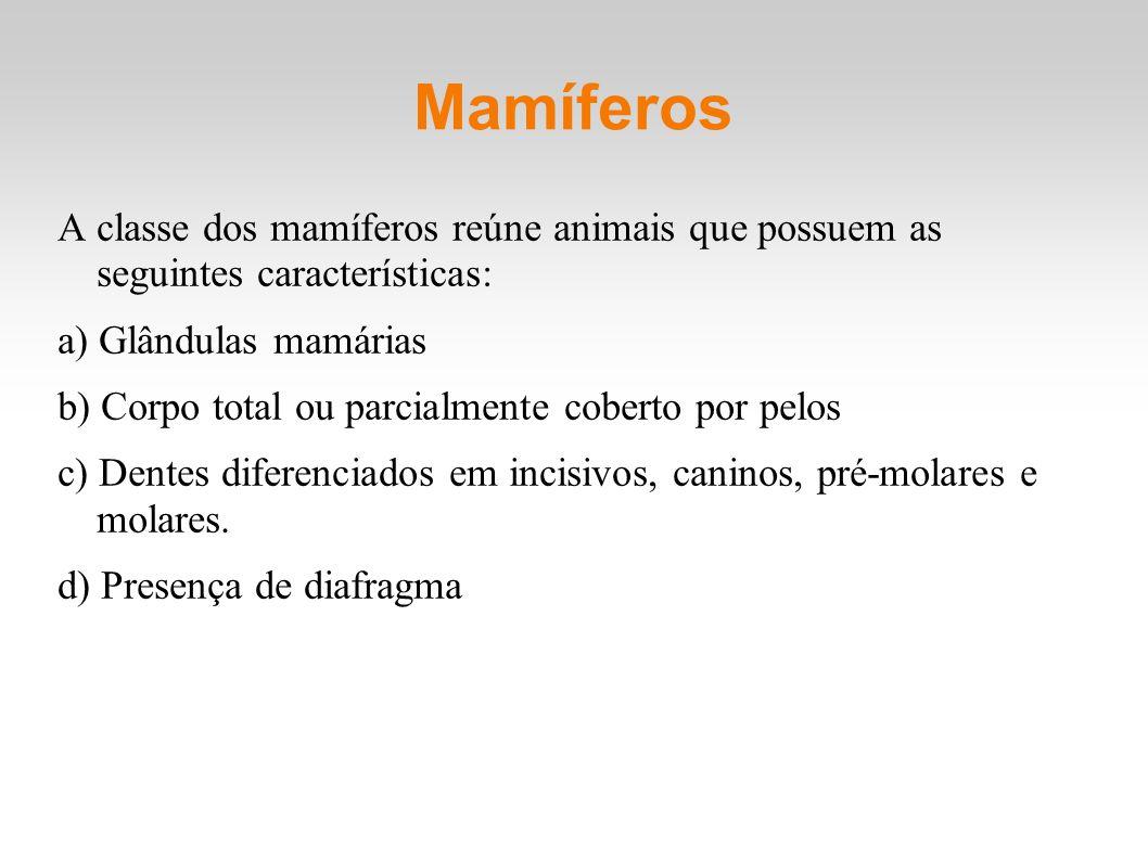 Mamíferos A classe dos mamíferos reúne animais que possuem as seguintes características: a) Glândulas mamárias b) Corpo total ou parcialmente coberto