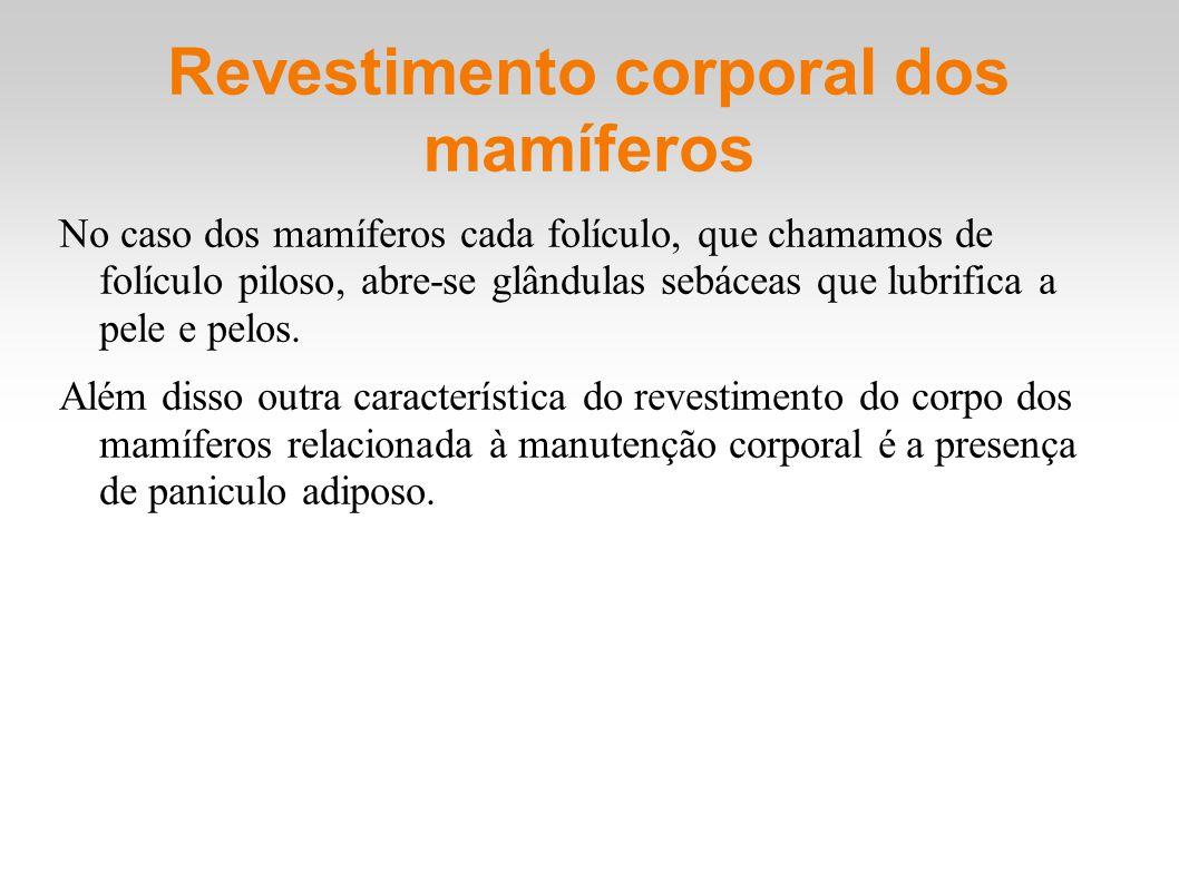 Revestimento corporal dos mamíferos No caso dos mamíferos cada folículo, que chamamos de folículo piloso, abre-se glândulas sebáceas que lubrifica a p