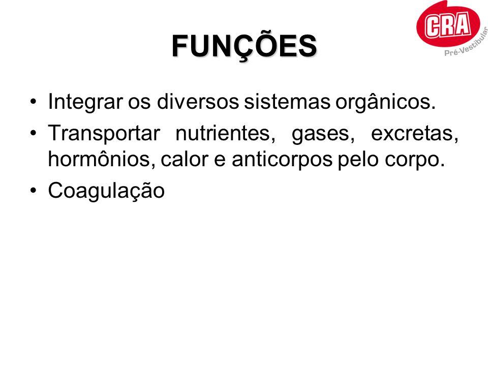 FUNÇÕES Integrar os diversos sistemas orgânicos. Transportar nutrientes, gases, excretas, hormônios, calor e anticorpos pelo corpo. Coagulação