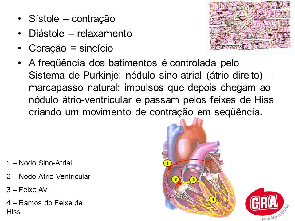 Sístole – contração Diástole – relaxamento Coração = sincício A freqüência dos batimentos é controlada pelo Sistema de Purkinje: nódulo sino-atrial (á