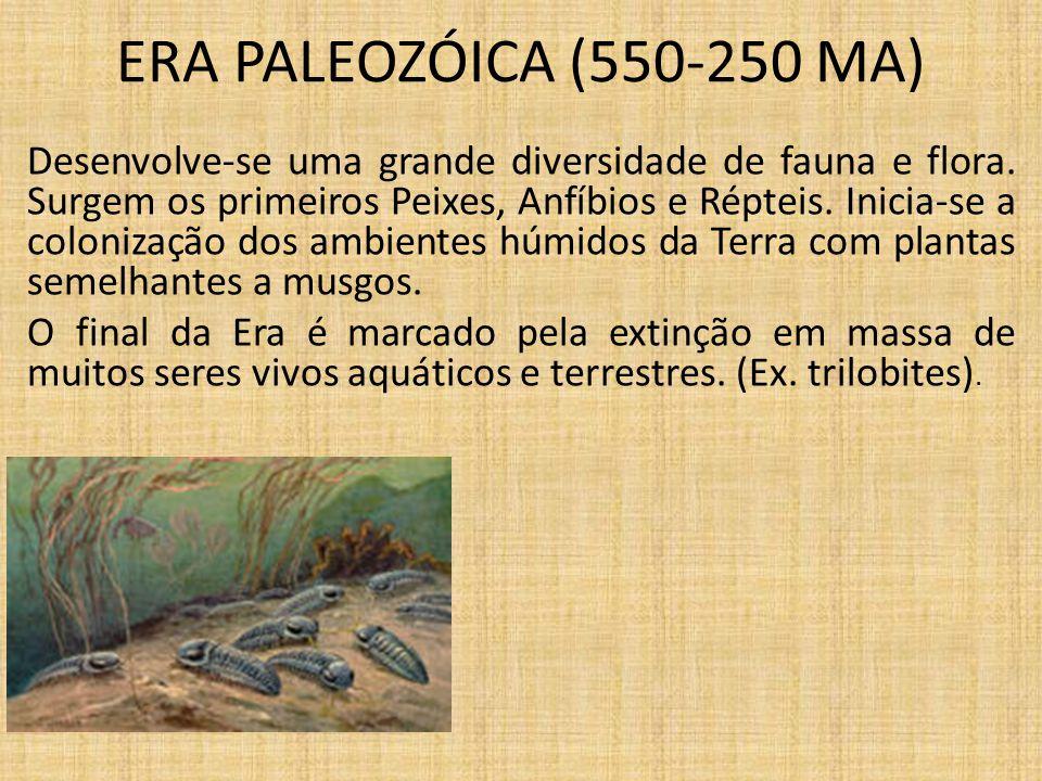 ERA MESOZÓICA (250-65 MA) As florestas de fetos foram substituídas por florestas de árvores de grande porte.