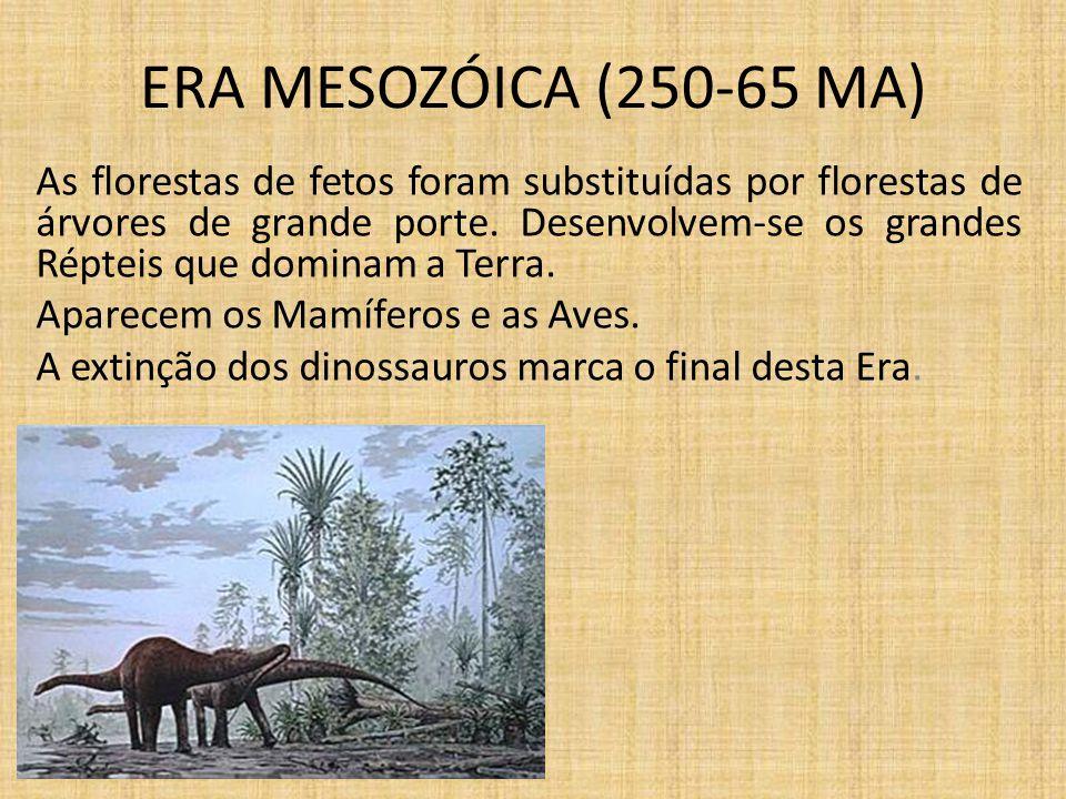 ERA MESOZÓICA (250-65 MA) As florestas de fetos foram substituídas por florestas de árvores de grande porte. Desenvolvem-se os grandes Répteis que dom