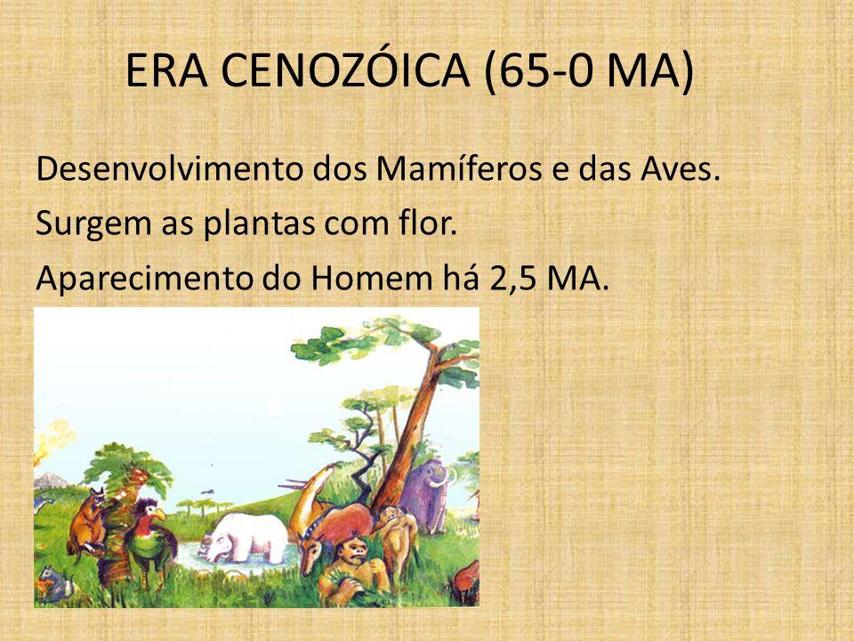 ERA CENOZÓICA (65-0 MA) Desenvolvimento dos Mamíferos e das Aves. Surgem as plantas com flor. Aparecimento do Homem há 2,5 MA.