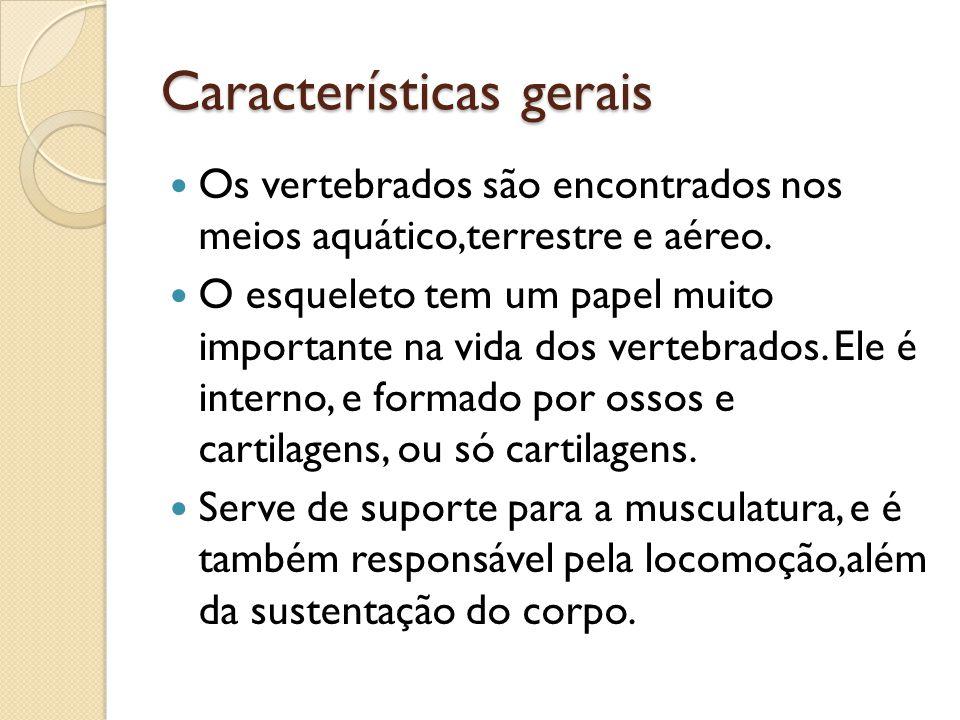 Características gerais Os vertebrados são encontrados nos meios aquático,terrestre e aéreo. O esqueleto tem um papel muito importante na vida dos vert
