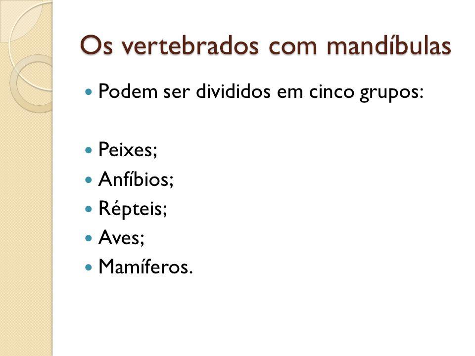 Os vertebrados com mandíbulas Podem ser divididos em cinco grupos: Peixes; Anfíbios; Répteis; Aves; Mamíferos.