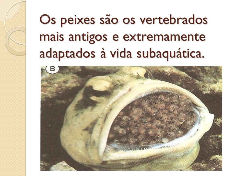 Os peixes são os vertebrados mais antigos e extremamente adaptados à vida subaquática.