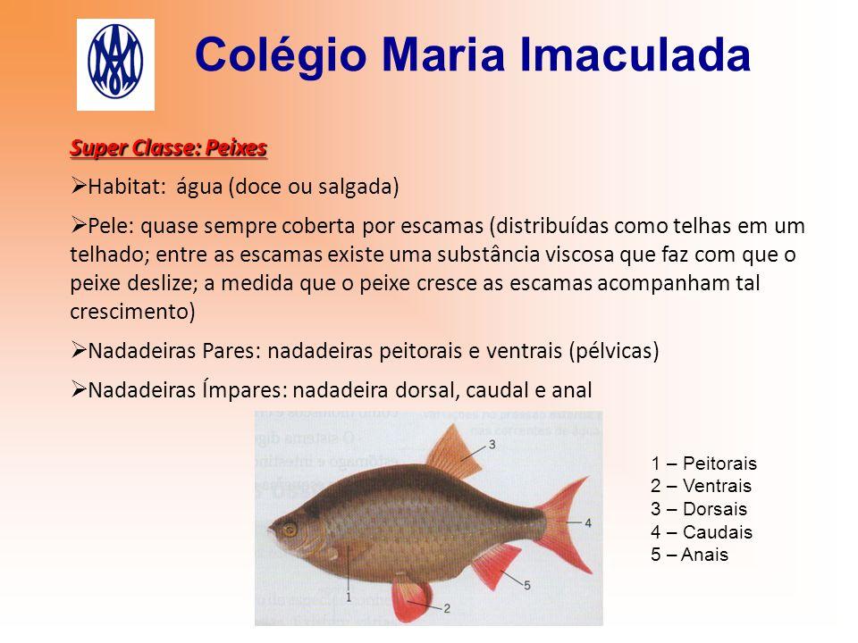 Colégio Maria Imaculada Super Classe: Peixes  Habitat: água (doce ou salgada)  Pele: quase sempre coberta por escamas (distribuídas como telhas em u