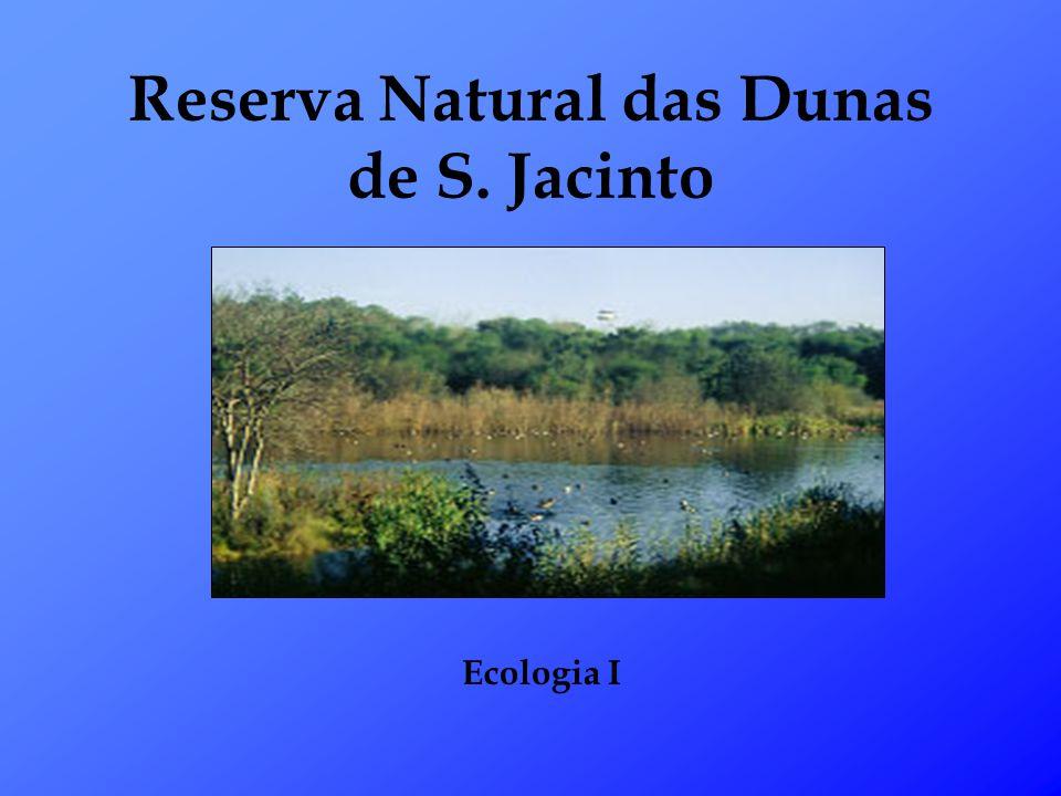 Reserva Natural das Dunas de S. Jacinto Ecologia I