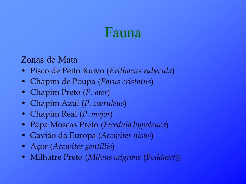 Fauna Zonas de Mata Pisco de Peito Ruivo ( Erithacus rubecula ) Chapim de Poupa ( Parus cristatus ) Chapim Preto ( P.