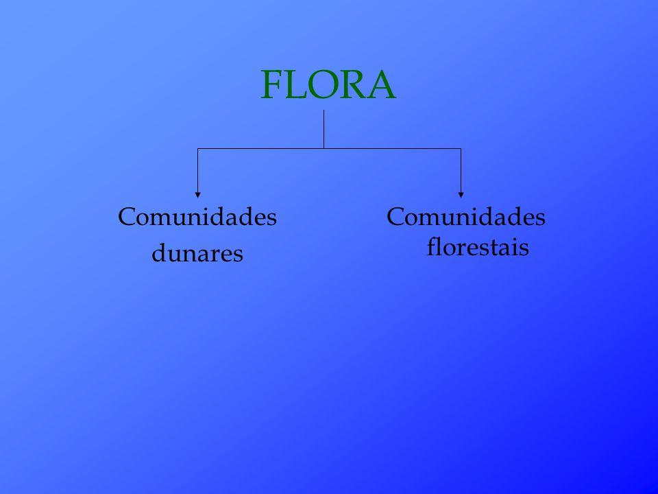 FLORA Comunidades dunares Comunidades florestais