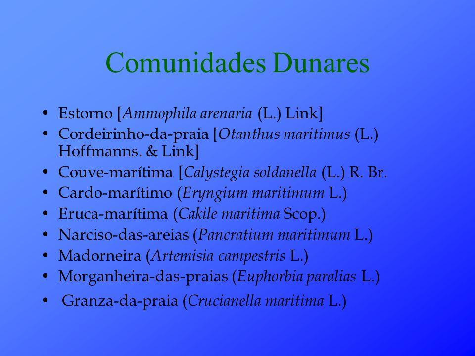 Comunidades Dunares Estorno [ Ammophila arenaria (L.) Link] Cordeirinho-da-praia [ Otanthus maritimus (L.) Hoffmanns.