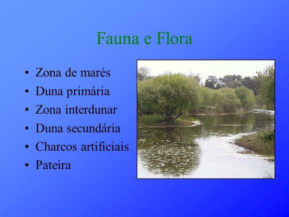 Fauna e Flora Zona de marés Duna primária Zona interdunar Duna secundária Charcos artificiais Pateira