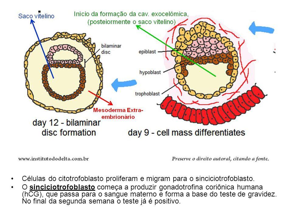 C élulas amniogênicas (amnioblastos) se deslocam do citotrofoblasto e formam o Âmnio que forra a Cavidade amniótica Ao mesmo tempo o Embrioblasto forma o Disco bilaminar conhecido como Disco Embrionário Formação do disco Embrionário Bilaminar Entre 8 e 9 dias
