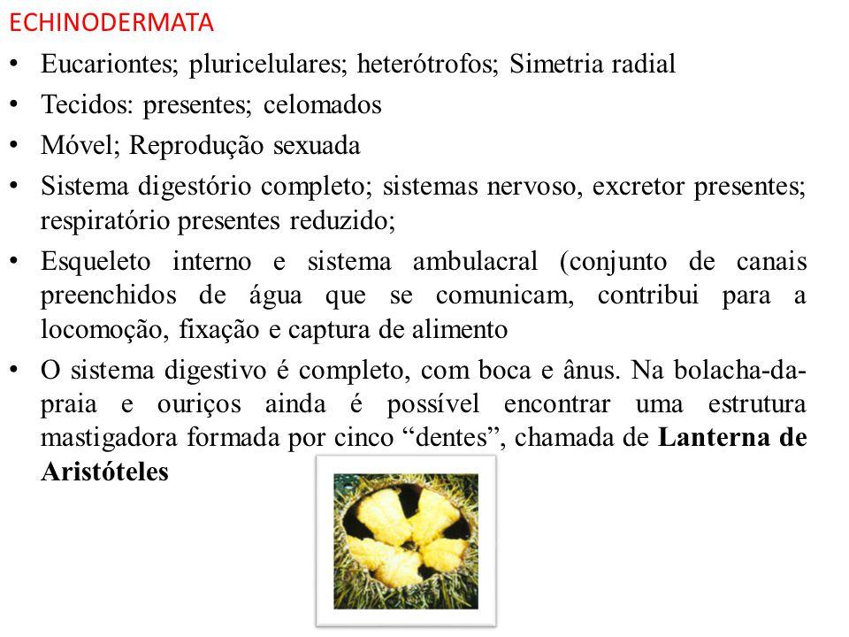 ECHINODERMATA Eucariontes; pluricelulares; heterótrofos; Simetria radial Tecidos: presentes; celomados Móvel; Reprodução sexuada Sistema digestório co