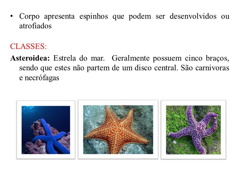 Corpo apresenta espinhos que podem ser desenvolvidos ou atrofiados CLASSES: Asteroidea: Estrela do mar. Geralmente possuem cinco braços, sendo que est
