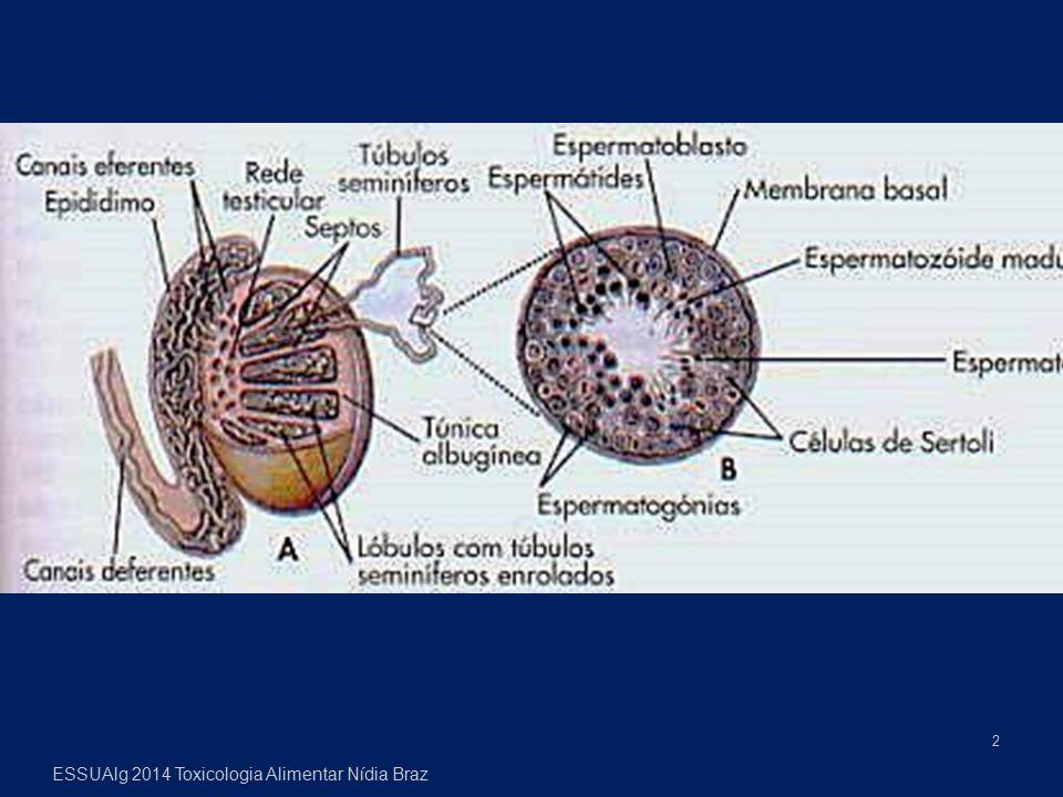 A placenta é uma barreira pouco eficiente, deixando difundir-se pequenas moléculas lipossolúveis e neutras, com facilidade, enquanto metais e outras substâncias passam por transporte activo.